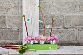Zinkeimer mit pinken Nelken und Rhabarberstangen in grünem Tablett