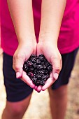 A lttle girl holding blackberries
