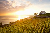 A view of the Lavaux vineyard on Lake Geneva, Switzerland