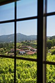 View from veranda window in Priorato de Vieite monastery of vineyards belonging to the Pazo de Vieite wine-growing estate