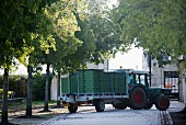 Grapes being delivered at Chateau Margaux