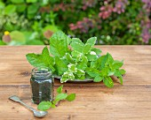 Three types of mint and a jar of pesto on a wooden table in a garden