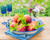 Nectarines with leaves in a bowl on a garden table