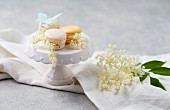 Macaroons with elderflower cream