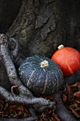Two different pumpkins next to a tree trunk