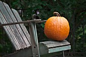 A pumpkin on a wooden chair in a garden