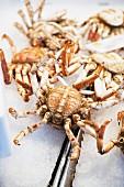 Crabs at a market