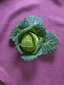 A savoy cabbage on a purple linen cloth