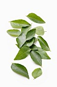 Curry leaves on a white surface