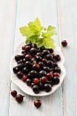 Blackcurrants on a white plate