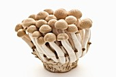 Buna-Shimeji Mushrooms on White Background