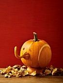 A pumpkin elephant head for Halloween