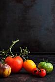 Mehrere Tomatensorten vor schwarzem Hintergrund