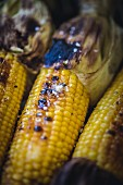 Grilled corn on the cob on the barbecue (close-up)