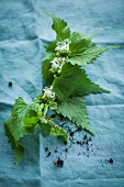 A nettle branch with flowers
