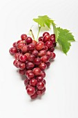 Red grapes with a leaf on a white surface