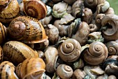 Edible snails, some without shells