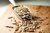 Oat grains in metal scoop