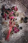 Fresh pink sorrel