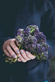 A woman holding purple tenderstem broccoli in her hands