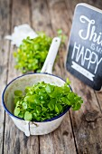 Fresh watercress in an enamel colander