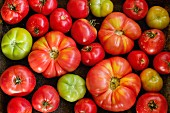 Various types of tomatoes (overhead view)