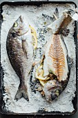 Two gilt-head bream in a bed of salt (seen from above)