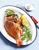 Grilled rose fish with lemon and herbs