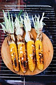 Grilled corn on the cob on a wooden plate