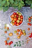 Italienische Kirschtomaten