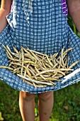 Mädchen hält frisch geerntete Bohnenschoten in Schürze