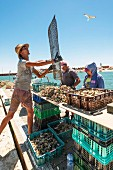 An oyster fisher in the Algarve region of Portgual
