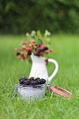 Chia pudding with blackberries on a meadow
