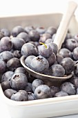 Blueberries in a bowl with a spoon
