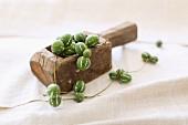 Garland of ornamental cucumbers in old wooden scoop