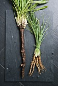 Black salsify and common salsify