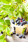 Blueberries in a wooden basket