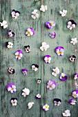 Stiefmütterchenblüten auf einem Brett mit abgeblätterter Farbe