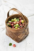Birchbark basket full of ripe green and red gooseberries over white background