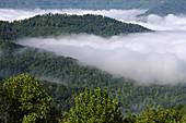Morning Fog from New River