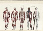 Anatomie Methodique Illustrations