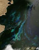 Phytoplankton off Argentina's coast
