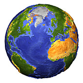 Topographic earth showing vegetation