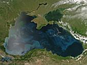 Black Sea Phytoplankton