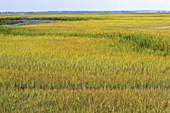 Inland marshes in Darien,Georgia