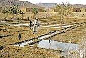 Irrigation,Sahara Desert