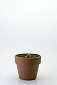 Plant Growth Sequence (1 of 5)