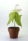 Plant Growth Sequence (5 of 5)