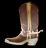 X-ray of Cowboy Boot