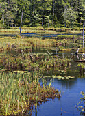 Painter Swamp,Pennsylvania,USA